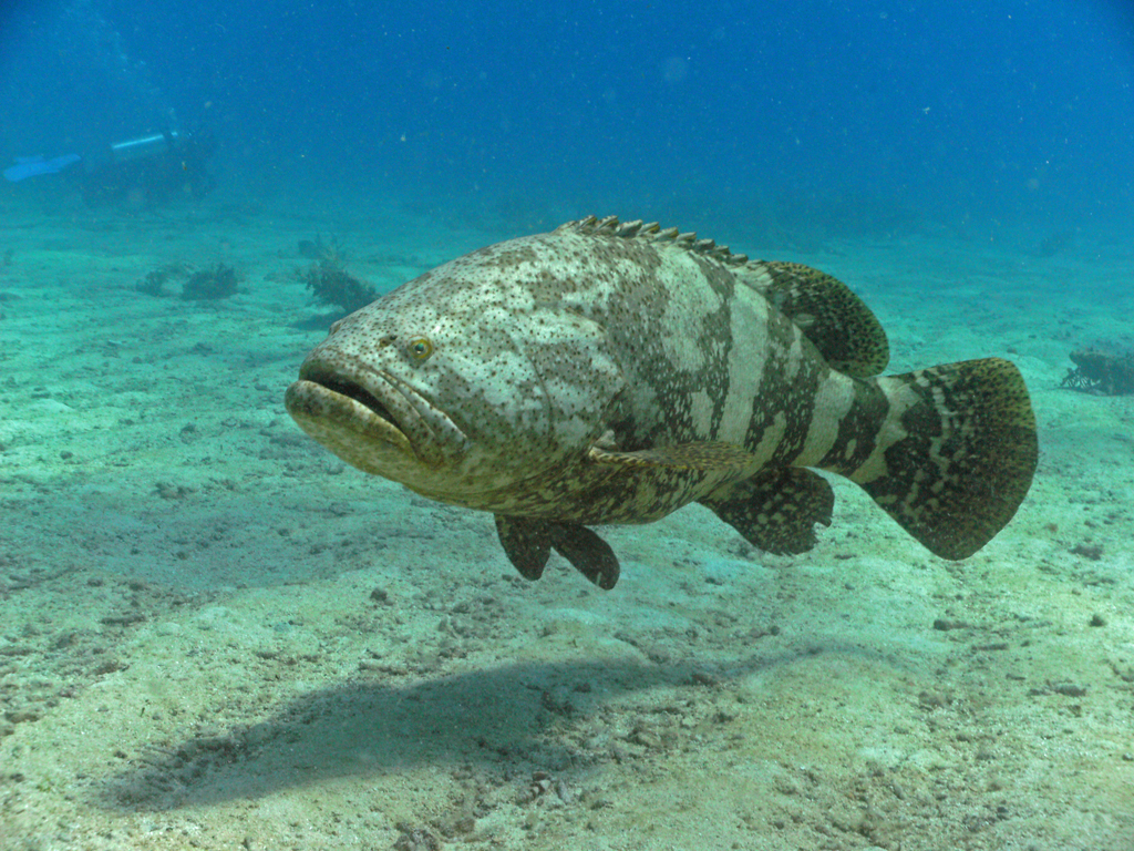 grouper dating closed