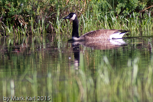 McDaniels Marsh May 30 2015-4