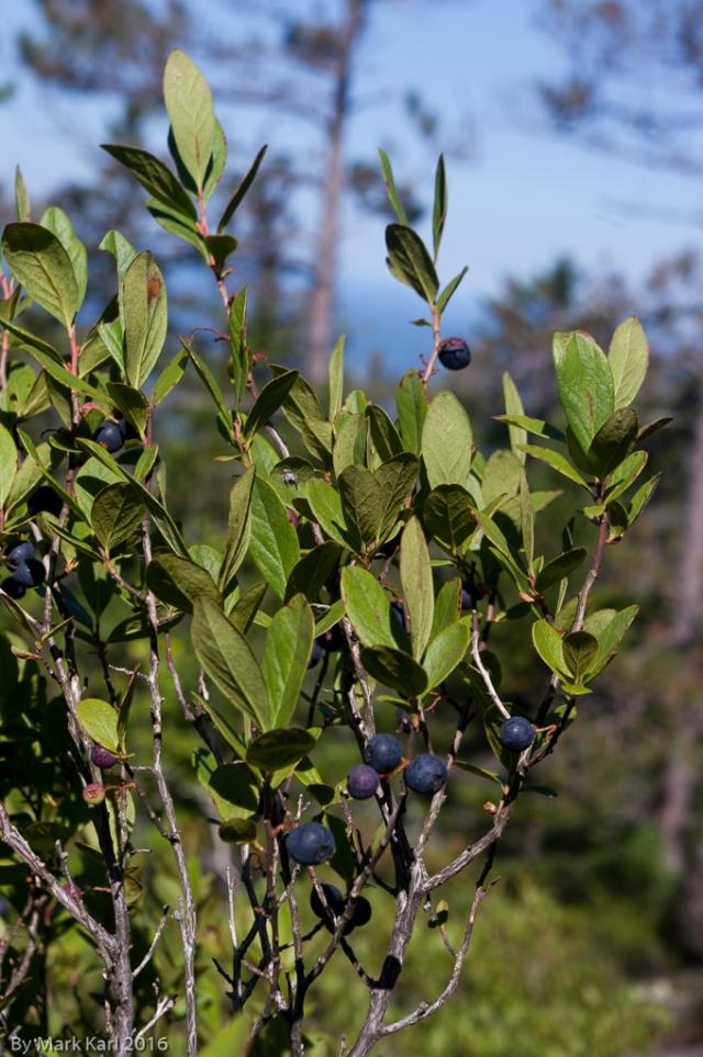 blueberry-mt-sep-5-2016-4