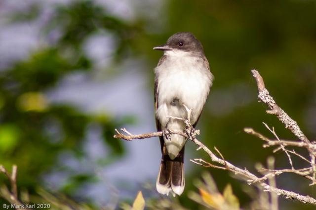 Bird Photo 1